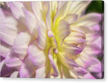 Dahlia Study 5 Painterly  Canvas Print