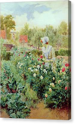 Pruning Canvas Print - Dahlias by Alfred Glendening