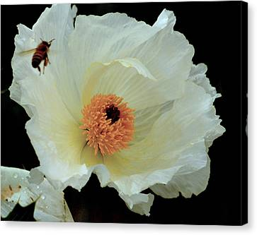 Canvas Print featuring the photograph Daily Grind.. by Al Swasey