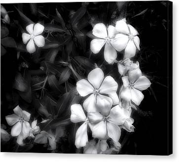 Dainty Blooms - Black And White Photograph Canvas Print by Ann Powell