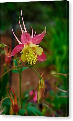 Dainty Flower Canvas Print by Amber Lea Starfire