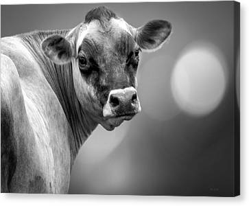 Dairy Cow Elsie Canvas Print by Bob Orsillo