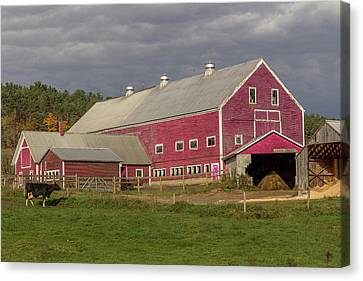Dairy Farming Nh Canvas Print by Capt Gerry Hare