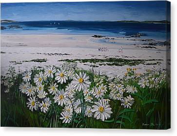 Daisies Connemara Ireland Canvas Print by Diana Shephard