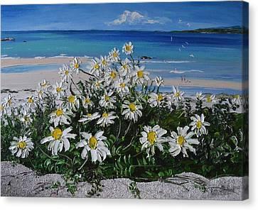 Daisies Coral Strand Connemara Canvas Print
