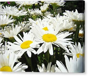 Daisies Floral Landscape Art Prints Daisy Flowers Baslee Troutman Canvas Print by Baslee Troutman