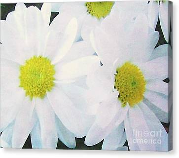 Daisies For Amy Canvas Print by Marsha Heiken