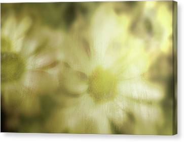 Daisies Canvas Print by Gray  Artus