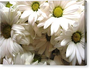 Canvas Print featuring the photograph Daisies Make Me Smile by Laura  Grisham