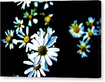 Daisies Canvas Print by Grebo Gray