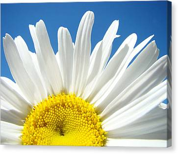 Daisy Art Prints White Daisies Flowers Blue Sky Canvas Print by Baslee Troutman