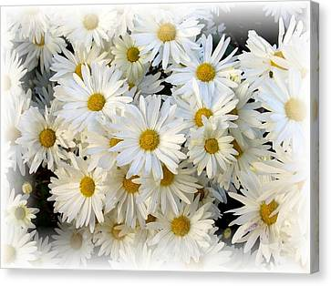 Daisy Bouquet Canvas Print by Carol Sweetwood