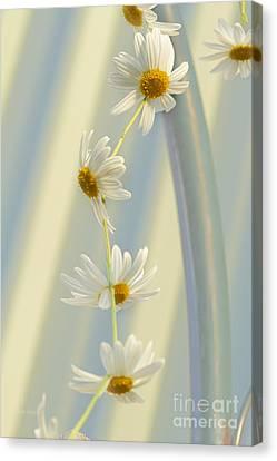 Daisy Chain Canvas Print by Elaine Teague