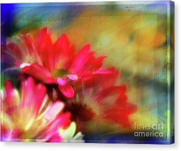 Daisy Dreams Canvas Print by Judi Bagwell