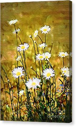 Canvas Print featuring the photograph Daisy Field by Donna Bentley