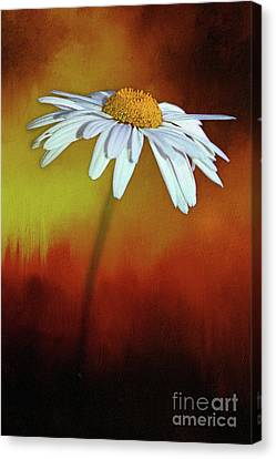 Daisy On Heat By Kaye Menner Canvas Print