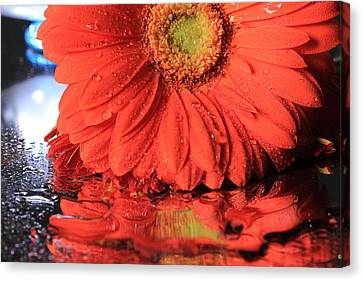 Daisy Reflections Canvas Print