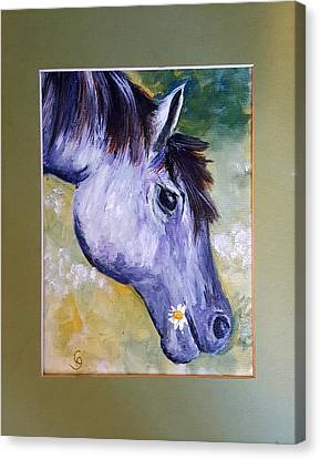 Daisy The Old Mare     52 Canvas Print