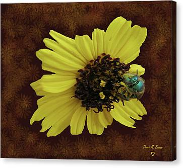 Canvas Print featuring the photograph Daisy With Bee  by Donna Brown