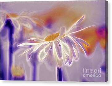 Daisyday - 101b Canvas Print by Variance Collections