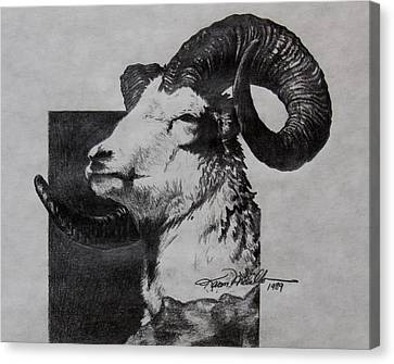 Dall Ram Canvas Print by Karon Melillo DeVega