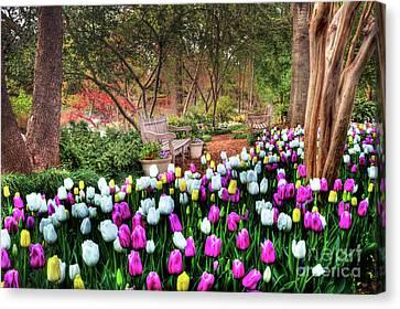 Dallas Arboretum Canvas Print by Tamyra Ayles