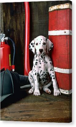 Barrels Canvas Print - Dalmatian Puppy With Fireman's Helmet  by Garry Gay