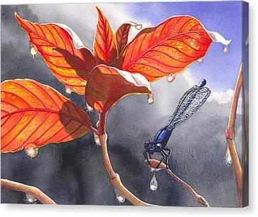 Damsel Fly Canvas Print by Catherine G McElroy