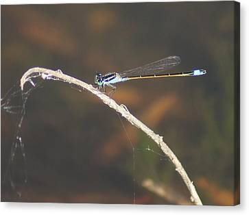 Canvas Print featuring the photograph Damselfly by Lynda Dawson-Youngclaus