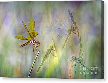 Dance Of The Dragonflies Canvas Print
