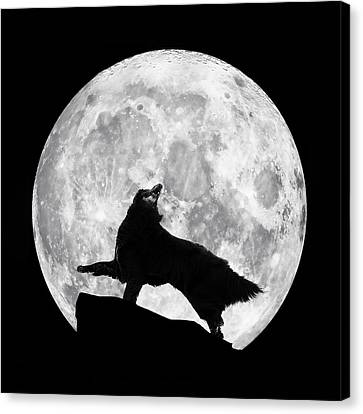 Dances With The Moon Canvas Print by Wolf Shadow  Photography