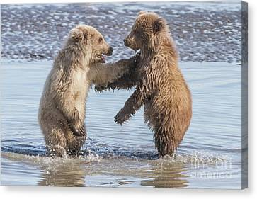 Canvas Print featuring the photograph Dancing Bears by Chris Scroggins