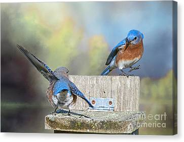 Dancing Bluebirds Canvas Print by Bonnie Barry