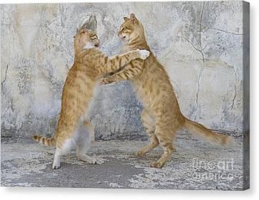 Litter Mates Canvas Print - Dancing Cats by Jean-Louis Klein aqnd Marie-Luce Hubert