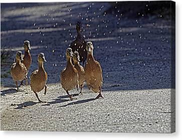 Dancing Duckies Canvas Print