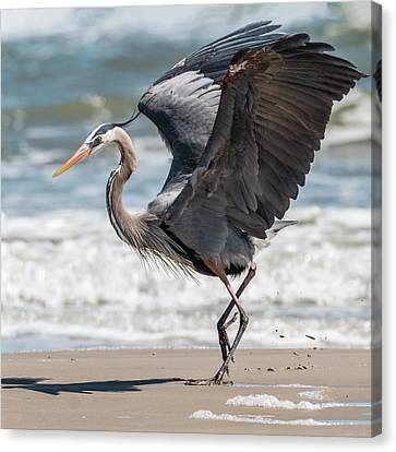 Dancing Heron #2/3 Canvas Print by Patti Deters
