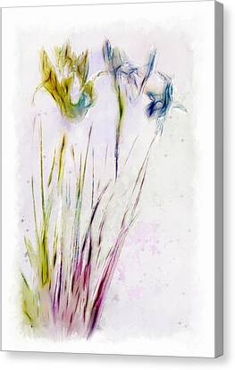Dancing Irises Canvas Print by Jill Balsam