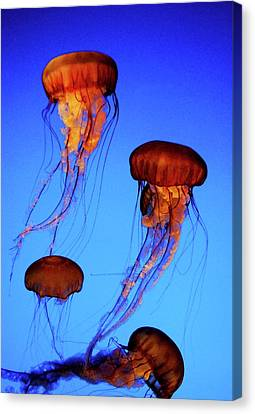 Canvas Print featuring the photograph Dancing Jellyfish by Anthony Jones