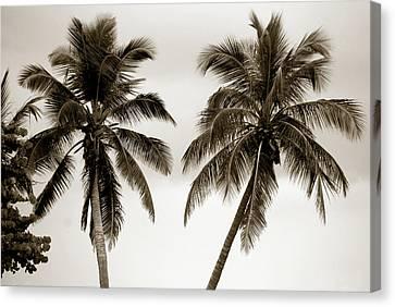 Dancing Palms Canvas Print by Susanne Van Hulst