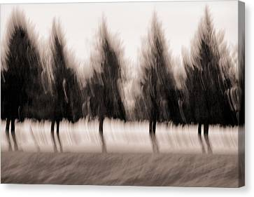 Dancing Pines Canvas Print by Carol Leigh