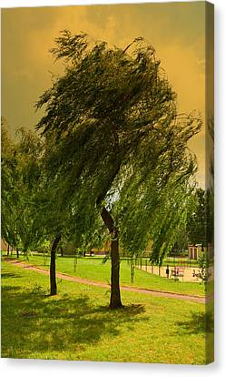Dancing Willow Canvas Print