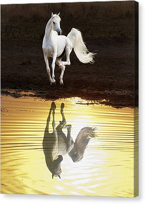 Dancing With Myself Canvas Print by Ron  McGinnis