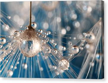 Canvas Print featuring the photograph Dandelion Blue Sparkling Drops by Sharon Johnstone
