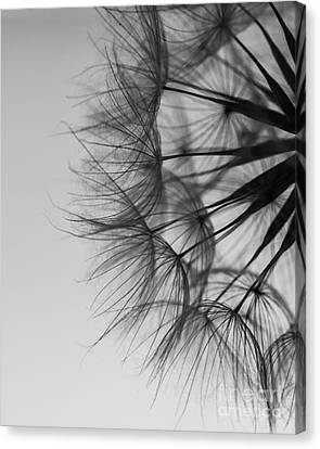 Canvas Print featuring the photograph Dandelion Close Up by Jan Bickerton