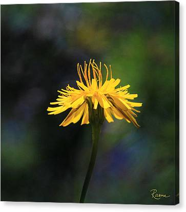 Dandelion Dance Canvas Print