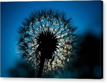 Canvas Print featuring the photograph Dandelion Dream by Jason Moynihan