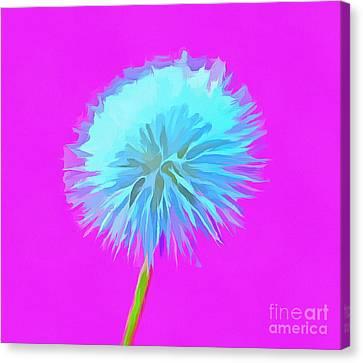 Dandelion Flair Canvas Print by Krissy Katsimbras