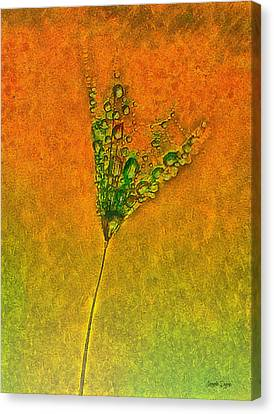 Dandelion Flower - Da Canvas Print by Leonardo Digenio
