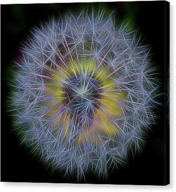 Dandelion Glow II Square Canvas Print by Terry DeLuco