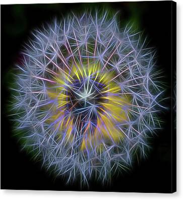 Dandelion Glow Square Canvas Print by Terry DeLuco